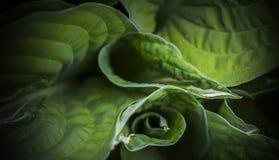 För liten droppeöversikt för grön kål natur Arkivfoton