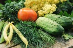för livstid grönsaker fortfarande Arkivbilder