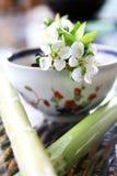 för livstid tea fortfarande Royaltyfria Bilder