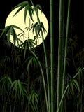 Lodlinjeillustration: bambuskog på natten. Royaltyfri Foto