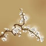 för målningsplommon för blomning orientalisk stil Royaltyfri Fotografi