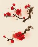 för målningsplommon för blomning orientalisk stil för fjäder Royaltyfri Foto