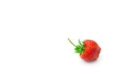 för makrojordgubbe för bakgrund ny isolerad white för studio Arkivfoto