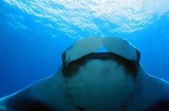för maldives för adduatoll indisk stråle för hav manta Royaltyfria Foton