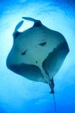 för maldives för adduatoll indisk stråle för hav manta Royaltyfri Fotografi