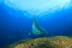 för maldives för adduatoll indisk stråle för hav manta Royaltyfri Bild