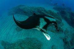 för maldives för adduatoll indisk stråle för hav manta Arkivfoton