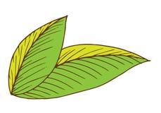 för mappillustration för ai tillgänglig leaf Royaltyfria Bilder
