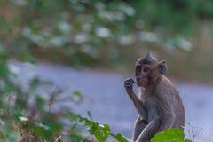 för marschapa för 2009 detalj sikt för natur tagen foto Royaltyfria Bilder