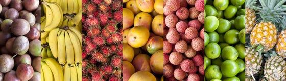 För matbaner för tropisk frukt bakgrund fotografering för bildbyråer