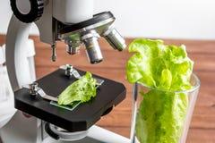 För matkontroll för begrepp sunda örter i laboratorium Royaltyfria Bilder