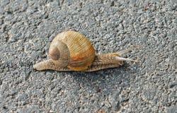för matvinranka för bakgrund olik white för snail för serie för bild Arkivbilder