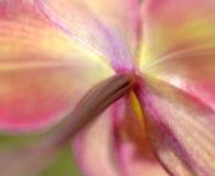 För meditationabstrakt begrepp för suddiga orkidér drömlik bakgrund Royaltyfri Foto