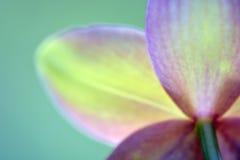 För meditationabstrakt begrepp för suddiga orkidér drömlik bakgrund Royaltyfri Fotografi