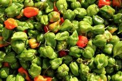för mexico för chilihabanero varmmast peppar modell Arkivbild