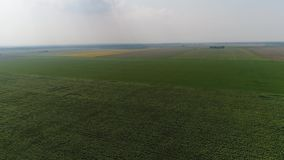 för mittfält för bi yellow för solros för sun för sommar för ljus blomma sen lager videofilmer