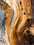 för modelltextur för bakgrund naturligt trä Royaltyfri Bild
