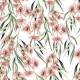 För modellwitn för vattenfärg sömlös filial för eukalyptus illustratören för illustrationen för handen för borstekol gör teckning vektor illustrationer