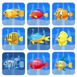 För moderiktiga färgrika stor uppsättning revdjur för tecknad film Fiskar däggdjur, skaldjur Delfin och haj, bläckfisk, krabba, s royaltyfri illustrationer