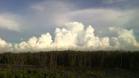 För molnmangrove för himmel vit skog och träbro royaltyfri foto