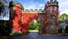 För murgrönabeläggning för höst röda väggar för porthus för slott på Stourhead, Wiltshire, UK arkivfoto