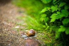 för naturbild för closeup ljus naturlig snail arkivfoto