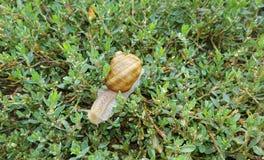 för naturbild för closeup ljus naturlig snail Fotografering för Bildbyråer