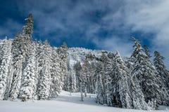 För Oregon för inter-Forest Crater Lake Snowy Mountain landskapfotografi träd Stillahavs- nordvästliga berg Royaltyfria Bilder