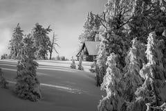 För Oregon för inter-Forest Crater Lake Snowy Mountain landskapfotografi träd Stillahavs- nordvästliga berg Royaltyfri Foto
