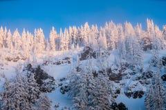 För Oregon för inter-Forest Crater Lake Snowy Mountain landskapfotografi träd Stillahavs- nordvästliga berg Royaltyfri Fotografi