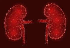För organmän 3d för njure inre poly geometrisk modell lågt Behandling för Urologysystemmedicin Framtida vetenskapsteknologi royaltyfri illustrationer