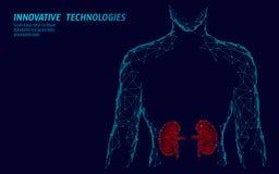 För organmän för njure inre modell för kontur 3d låg poly geometrisk Behandling för Urologysystemmedicin Framtida vetenskap royaltyfri illustrationer
