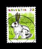 För Oryctolaguscuniculus för inhemsk kanin domesticus, djurserie, circa 1991 Arkivbilder