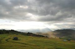 För Pak för risfältfält chiangmaien för sting bung Royaltyfri Fotografi