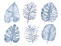För palmträdblad för vattenfärg som tropisk hand målad indigoblå uppsättning isoleras på vit bakgrund Fotografering för Bildbyråer