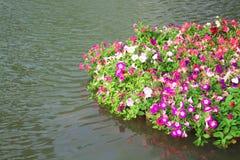 För petuniablommor för natur färgrika mångfärgade modeller med gröna sidor som blommar i bambuflotte på vattenbakgrund arkivfoton