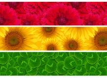 För platssolros för tre titelrad modell för växt av släktet Trifolium för dahlia Arkivfoto