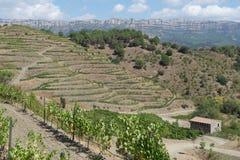 för prioratpriorato för aka organisk spain vingård Arkivbilder