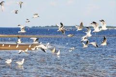 för queensland för mooloolaba för Australien kustflyg taget solsken seagulls Arkivbild