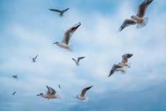 för queensland för mooloolaba för Australien kustflyg taget solsken seagulls fotografering för bildbyråer