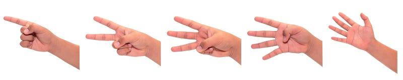 För räkningshand för en till fem fingrar gest Royaltyfri Fotografi