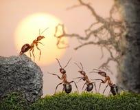 för rådbeslut för myror samlat arbete för lag Arkivbild