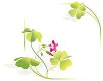 för ramleave för växt av släkten Trifolium fyra vektor vektor illustrationer