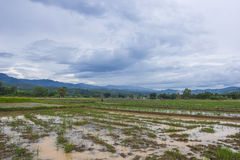 För regn på växtfält Arkivbild