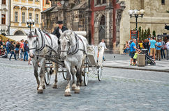 för republiktown för cesky tjeckisk krumlov medeltida gammal sikt Lag av vita hästar med en kusk på den gamla stadfyrkanten i Pra Royaltyfri Bild