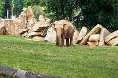 för republiktown för cesky tjeckisk krumlov medeltida gammal sikt Prague Prague zoo Elefant Juni 12, 2016 Arkivfoto