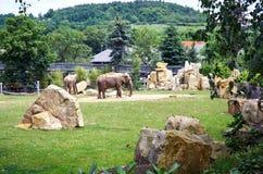 för republiktown för cesky tjeckisk krumlov medeltida gammal sikt Prague Prague zoo elefanter Juni 12, 2016 Arkivfoton