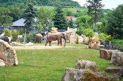 för republiktown för cesky tjeckisk krumlov medeltida gammal sikt Prague Prague zoo elefanter Juni 12, 2016 Arkivfoto