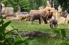 för republiktown för cesky tjeckisk krumlov medeltida gammal sikt Prague Prague zoo elefanter Juni 12, 2016 Royaltyfria Bilder