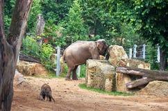 för republiktown för cesky tjeckisk krumlov medeltida gammal sikt Prague zoo 2009 behandla som ett barn det tagna elefantfotoet J Arkivbild